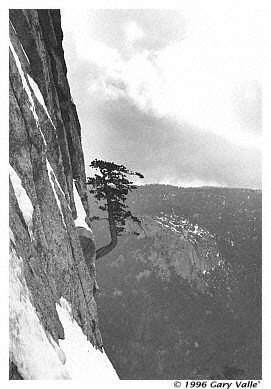 THE TREE, North Buttress, Tahquitz Rock
